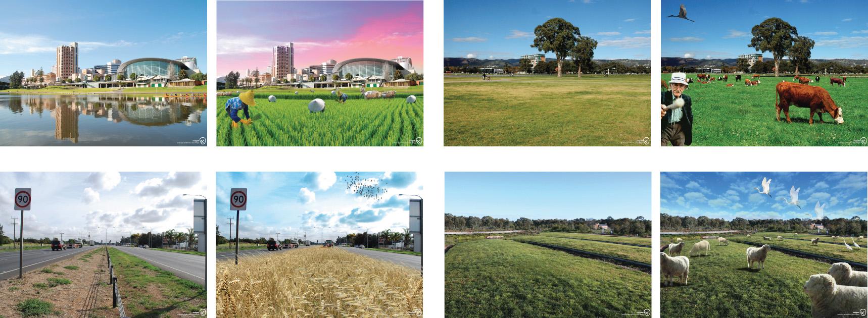 Designing edible urban landscapes tickle for Oxigen adelaide
